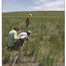 RMRS technicians monitoring a post-fire native grass, forb and sagebrush seeding in northern Utah. Photo by Matt Fisk, USDA FS