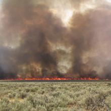 A wildfire that burned through a Wyoming big sagebrush ecosystem with an invasive annual grass understory in southern Idaho, photo by Douglas J. Shinneman