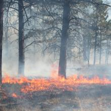 Prescribed fire in the Manitou Experimental Forest, Pike National Forest, October 2014. Reintroduction of fire through prescribed or wildland fire use is a vital component of restoration to restore ecological processes. Photo: Steve Alton, USFS