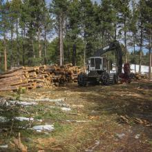 Tree removals to create a more open forest condition and reduce wildfire risk. Photo: Weston Toll, TNC.