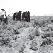 Scientists working in the Great Basin Experimental Range circa 1939
