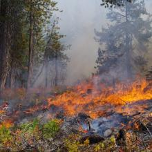 A prescribed burn to restore whitebark pine forests on the Lolo National Forest in Montana near Mink peak. Photo by Robert E. Keane.