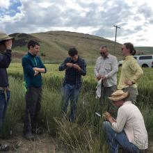 RMRS and PNWRS field crews training to collect data at bluebunch wheatgrass experimental plot at Central Ferry, WA. Photo by Holly Prendeville.
