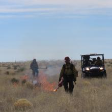 A firefighter in the process of lighting a prescribed fire with a drip torch: a utility task vehicle follows behind.