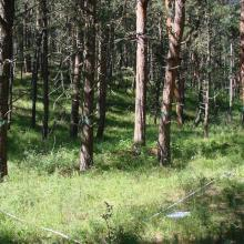 Permanent study plot in 2007 immediately prior to timber harvest.