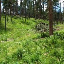 Permanent study plot in 2010 three years following timber harvest.