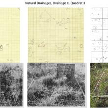 Natural Drainages, Drainage C, Quadrat 3 - photo comparisions of historical and current plots - Sierra Ancha Experimental Forest