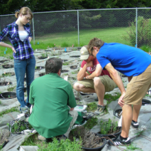 Montana State University collaborator Dr. Robert Peterson instructing students in use of Li-Cor portable photosynthesis and fluorescence system in the Bozeman Forestry Sciences' research garden (photo by S.E. Sing).