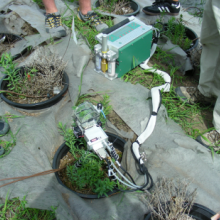 Close-up of a Li-Cor 6400 measuring gas exchange in toadflax genotypes (photo by S.E. Sing).