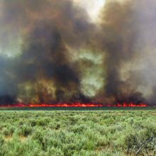 A wildfire that burned through a Wyoming big sagebrush ecosystem with an invasive annual grass understory in southern Idaho. Photo by Douglas J. Shinneman.