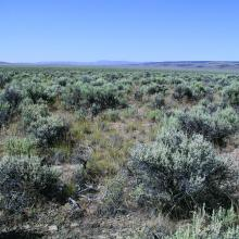 Wyoming big sagebrush type with warm and dry soils and low resilience and resistance. Photos by Jeanne C. Chambers.