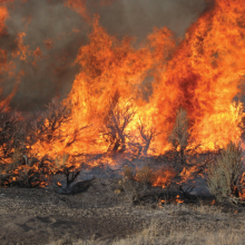 Close-up of a fire in a Wyoming big sagebrush ecosystem, photo by Scott Schaff