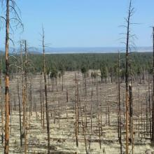 High severity burned area from the Hochderferr-Horseshoe wildfires in northern Arizona with a study looking at long-term post-wildfire correlates with avian community dynamics