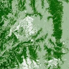 Landsat map of tree canopy cover taken in 2005 located in the same location in the central Rocky Mountains in northern Colorado, near Steamboat Springs.