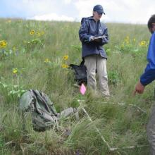 Field technicians sampling vegetation plots in Montana