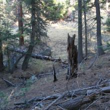 Coarse woody debris in mixed-conifer forest, northern Arizona