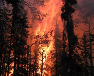 Crown fires travel quickly from tree top to tree top, burning with high intensity.