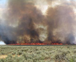 A wildfire burning through a Wyoming big sagebrush community with the invasive annual grass, cheatgrass, in the understory.  These types of communities have low resilience or recovery potential (photo by Doug Shinneman)