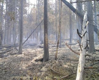 Charred trees and bare mineral soil after a high-severity fire on the Priest River Experimental Forest.