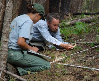 Researchers monitoring the establishment of invasive species after a wildfire near Missoula, Montana.