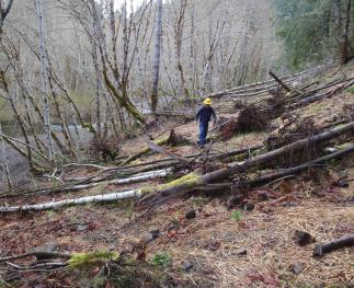 Decommissioning forest roads can reduce erosion and promote recovery of riparian ecosystems.