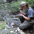 Sampling streamwater in watersheds of the Hayman Fire
