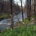 Monitoring flow, turbidity, and instream sedimentation on tributary to the Cache la Poudre River.