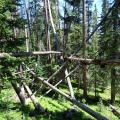 Many fallen trees caught on one another in the Fraser Experimental Forest.
