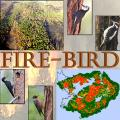 Image of a logo for the tool FIRE-BIRD including the text FIRE-BIRD in the center with photos of woodpeckers, a wooded landscape, and GIS map surrounding the text. A transparent up close image of a tree trunk is in the background.