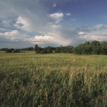 An image of grasslands