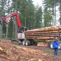 Forest operations influence carbon sequestration and emissions over time (photography by Dr. Han-Sup Han, Humboldt State University).