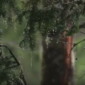 Screen capture from the video Forest Service Research - Protecting a Rich Legacy