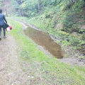 A researcher walking next to a small stream.