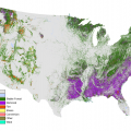 A map of the United States showing forest loss event types - green (most of the northeast and west) shows stable forest, purple (most of the southeast) shows removal, and other colors indicate fire, stress, conversion, wind, and other.