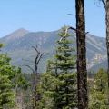 The San Francisco Peaks in northern Arizona are sacred to many Native American groups.