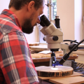 Research Ecologist Justin DeRose measuring ring widths to crossdate and digitize tree-ring features. Photo by Lawrence Lam.