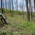 Tree planting after a wildfire on the Boise National Forest
