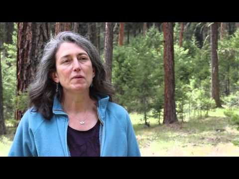 Carol Miller - Research Ecologist