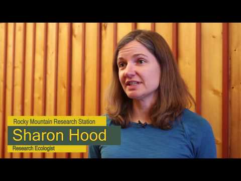 Dr. Sharon Hood - Research Ecologist