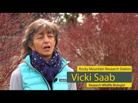 Dr. Victoria Saab - Research Wildlife Biologist