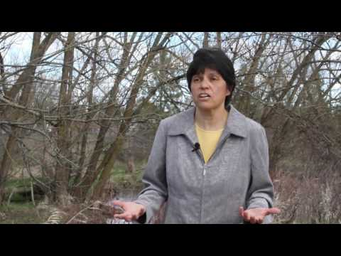 Terrie Jain - Research Forester