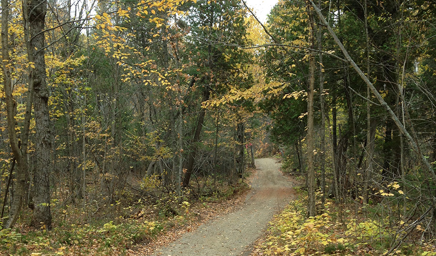 A forest trail with fall colors
