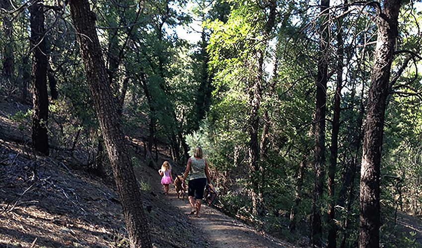 A mother and children walking along a forest trail