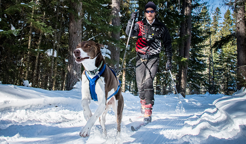 A cross country skier and his dog