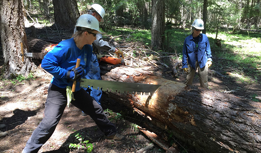 Trail crew members cutting a down log across a trail with a crosscut saw.