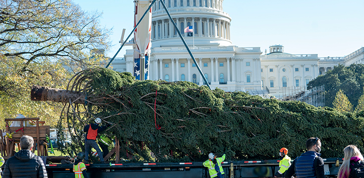 A picture of the U.S. Capitol in the background and the Capitol Christmas Tree about to be lifted and stood up from the bed of a large semi truck.