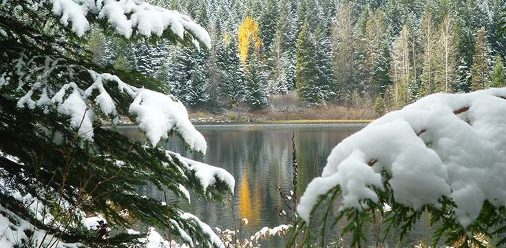 A scenic winter picture with several tree branches in the foreground and a lake in the background, with snow on the trees.