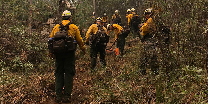 A picture of a hotshot crew digging a fireline in a brushy, grassy area on a hillside.