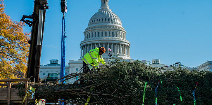 Architect of the Capitol workers unload the U.S. Capitol Christmas Tree, a 60-foot blue spruce from the Carson National Forest in New Mexico, arrived at Nation's Capitol on, Nov. 25, 2019.