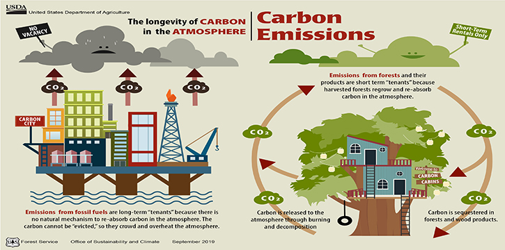 This graphic illustrates the open cycle of fossil fuel emissions to the atmosphere and the biogenic, closed loop of forest carbon in the atmosphere. (USDA Forest Service graphic)